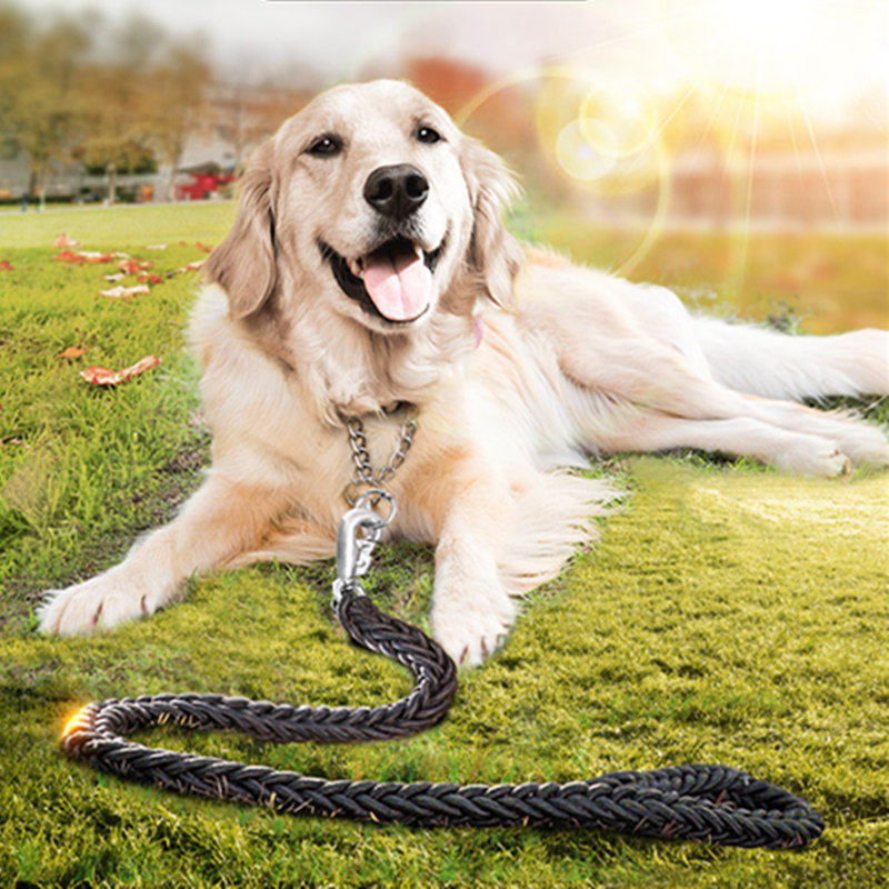 วิธีการรถไฟของสุนัขโกลเด้นรีทรีฟเวอร์ การฝึก retri สีทอง